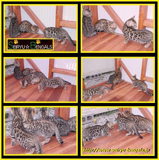 12012 Kitten 野外