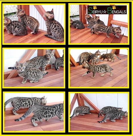 2012 Kitten 野外3
