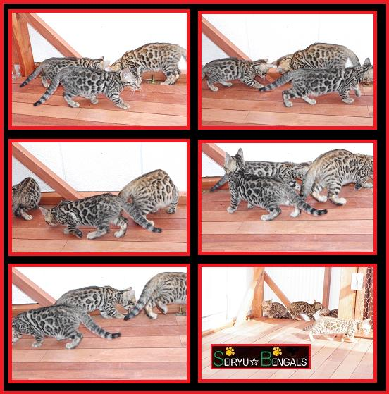 2012 Kitten 野外4