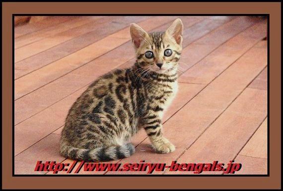 2012 Kitten 野外正面