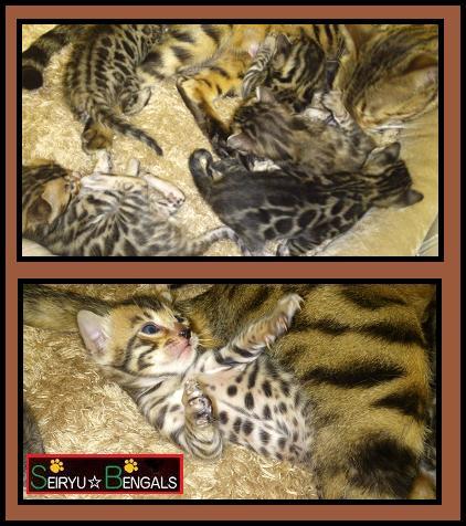 2012 Kitten  10月2