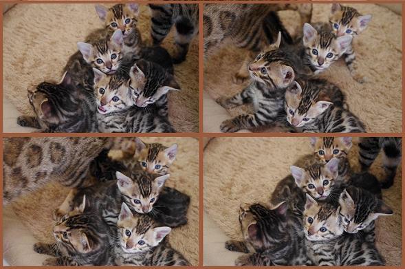 2012 Kitten 12月集合