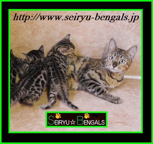 2012 Kitten 子育て2