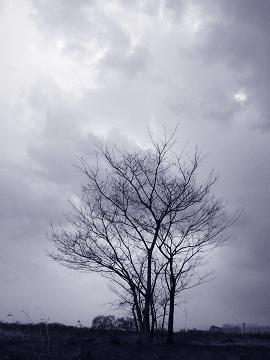 空と樹と・・・