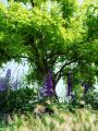 デルフェニウムと樹