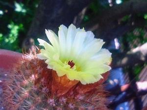 39.8℃の花見