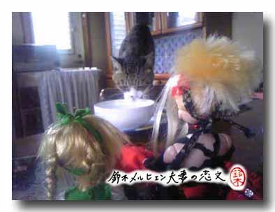 猫の水のみを観察する二人。正直猫ってアホみたいと思っている。
