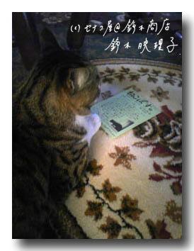 鈴木映理子撮影・「ねこぽす」を読む猫。うまいこと撮ってあります。