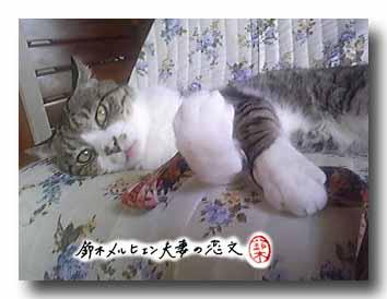 猫が持っているストラップ、これも実はよーく見ると・・・USAVICHと・・・