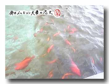 長洲の金魚と鯉の郷広場にて。でもメインの建物は閉館中だった。