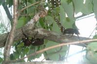 仙台定義カブトムシの森2
