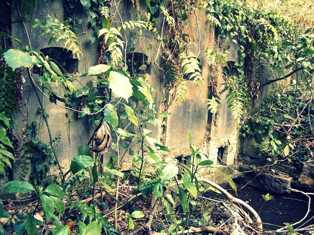 密林に佇む奇妙な壁
