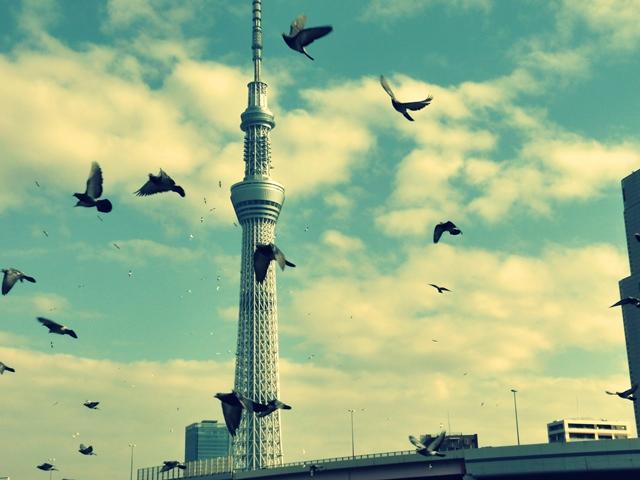 空の木と鳩