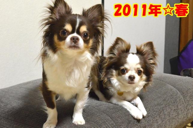 2011-4せっちゃんち8