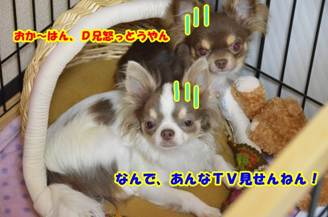 DSC_6562.jpg