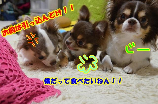 DSC_6650.jpg