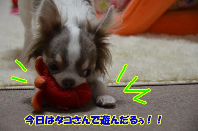 DSC_6789.jpg