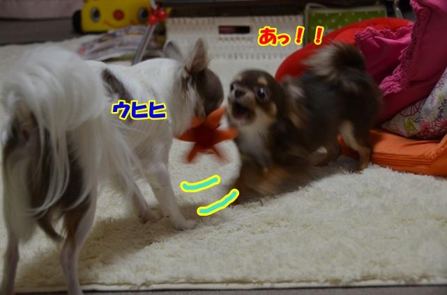 DSC_6794.jpg