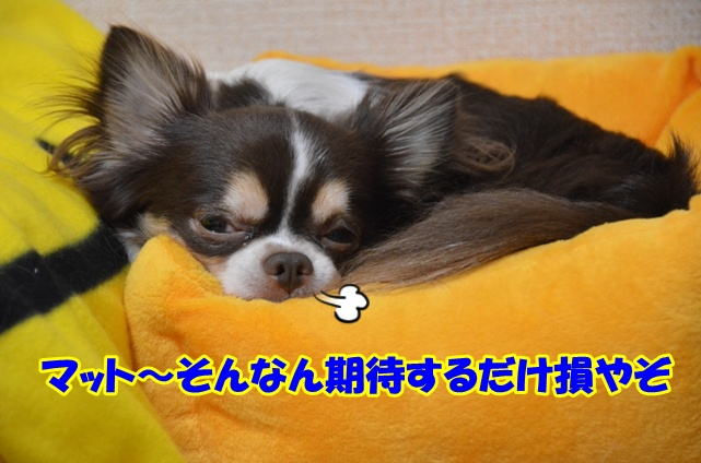 DSC_6800.jpg