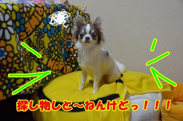 DSC_6809.jpg