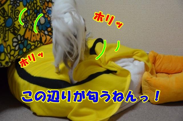 DSC_6813.jpg
