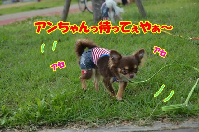 DSC_6870.jpg