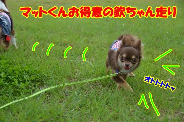 DSC_6900.jpg
