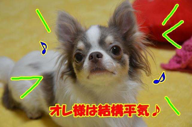 DSC_6911.jpg