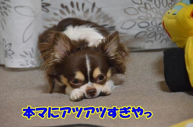 DSC_6913.jpg
