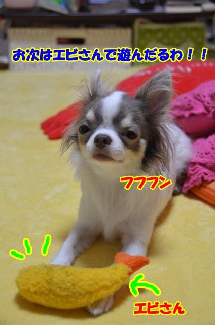 DSC_6915.jpg