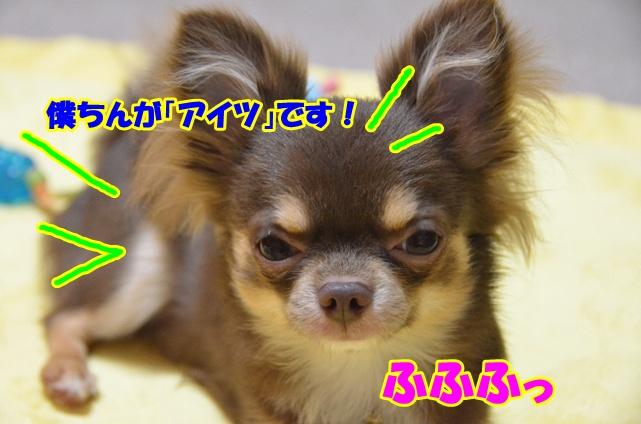 DSC_6948_20110626214621.jpg