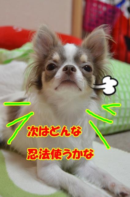DSC_6988.jpg