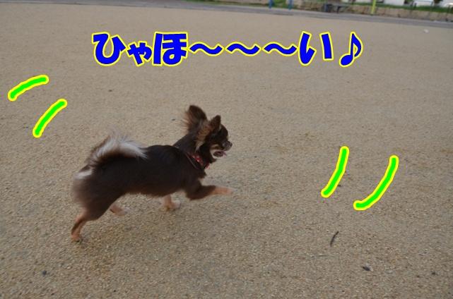 DSC_7033.jpg
