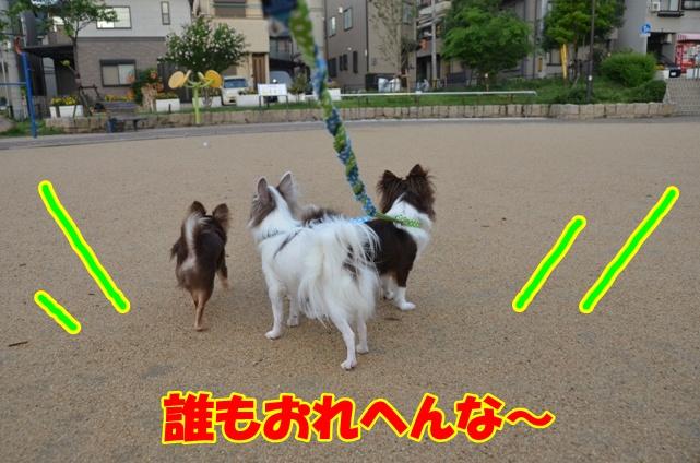 DSC_7035.jpg
