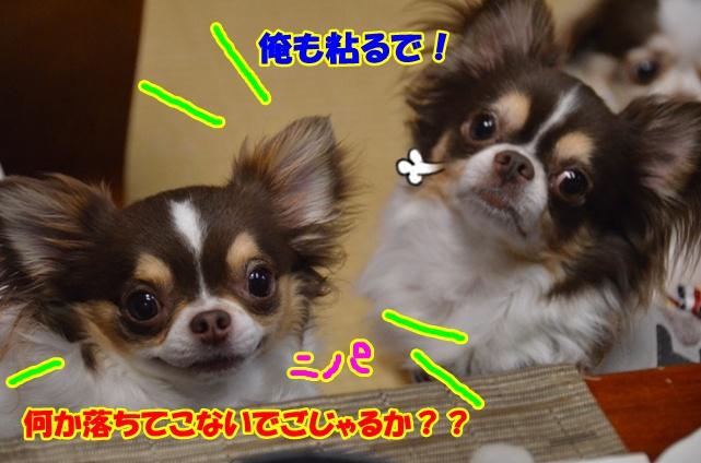 DSC_7347.jpg