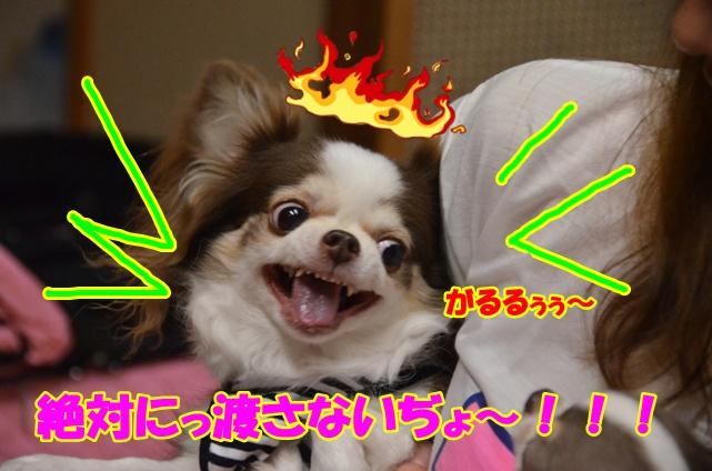 DSC_7353.jpg