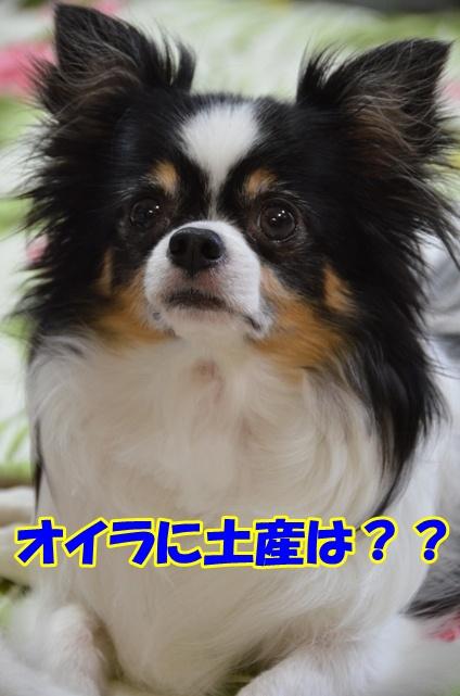 DSC_7567_20110730213226.jpg