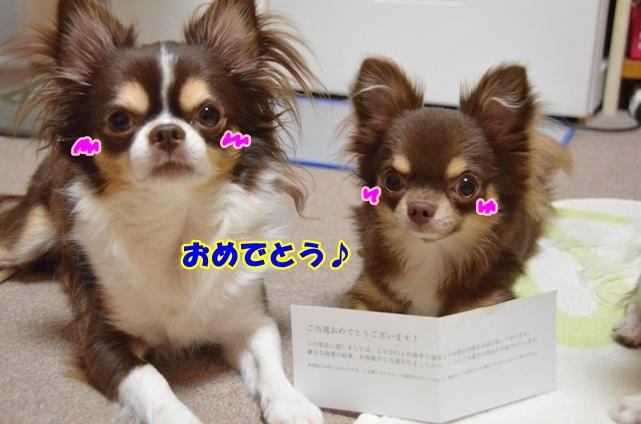 DSC_8264.jpg