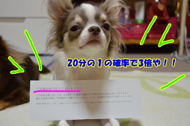 DSC_8267.jpg