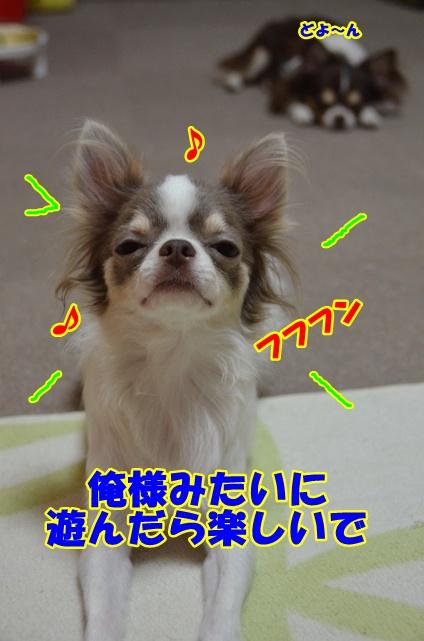 DSC_8279.jpg