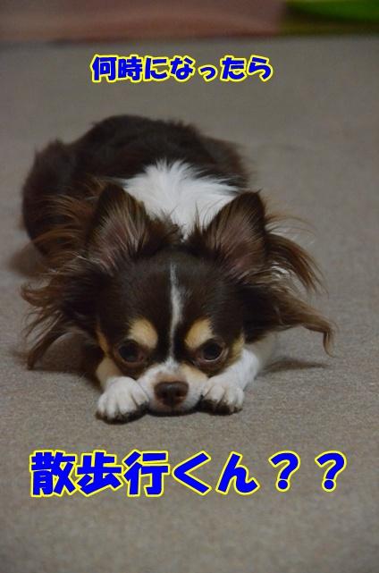 DSC_8281.jpg