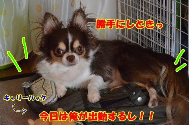DSC_8285.jpg