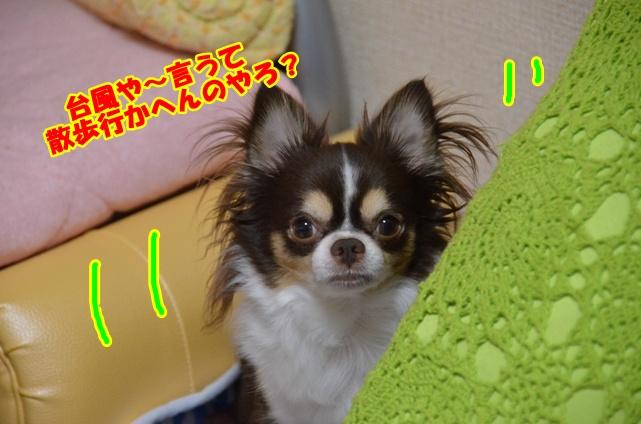 DSC_8471.jpg