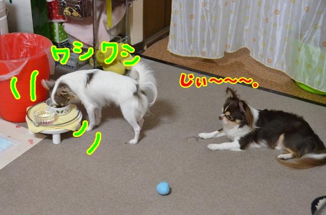 DSC_8485.jpg