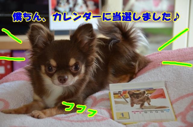 DSC_8637.jpg
