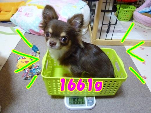P1050635.jpg