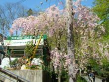 Marの人生の一片-箕面×桜