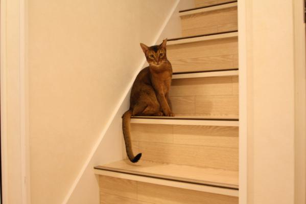 階段猫アップ