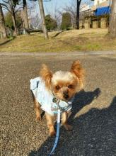 ラピス桜公園20141219