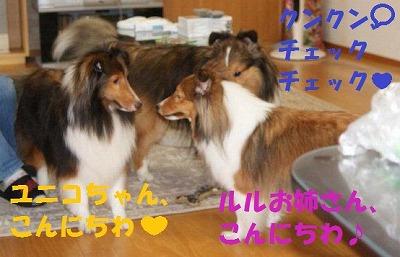 2010-8-25-ruru-yuni-art.jpg